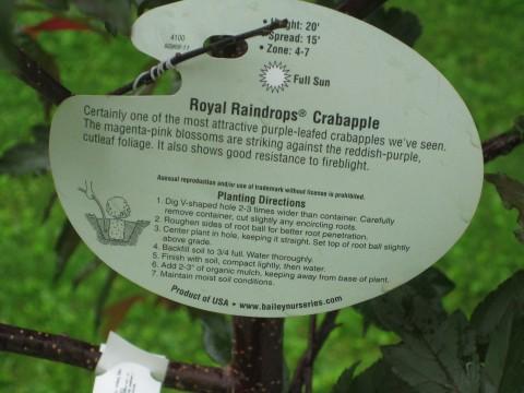 Robin's tree is a flowering crabapple tree.